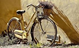Városi Sportnap – Arborétum kerékpártúra