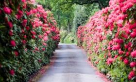 Botanikuskerti kerekezés a Jeli arborétumba