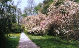"""""""Tekerj és fotózz"""" – Kerékpártúra a Szelestei Arborétumba"""